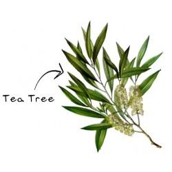 HE TEA TREE BIO